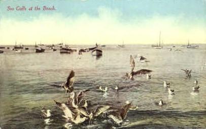 Sea Gulls at the Beach - MIsc, California CA Postcard
