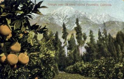 Oranges near the Mountains - MIsc, California CA Postcard