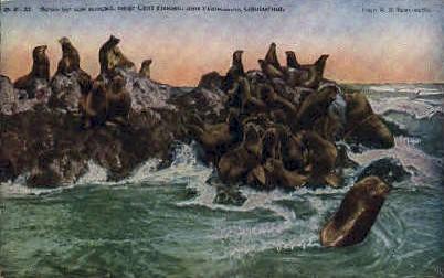 Seals on the Rocks - San Francisco, California CA Postcard
