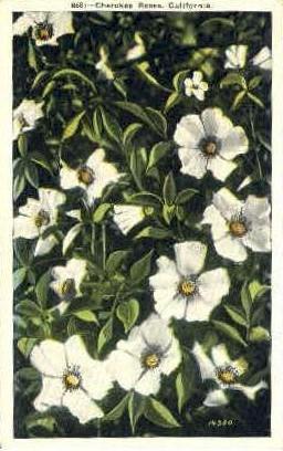 Cheroke Roses - MIsc, California CA Postcard