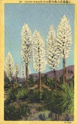 Yuccas in Bloom - MIsc, California CA Postcard