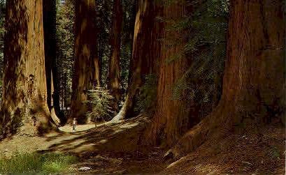 Senate Group, Redwoods - MIsc, California CA Postcard