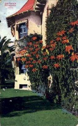 Poinsettia - MIsc, California CA Postcard
