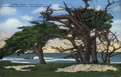 17 Mile Drive - Monterey, California CA Postcard