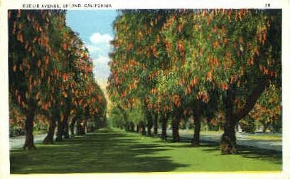 Euclid Avenue - Upland, California CA Postcard