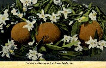 San Diego, California, CA Postcard