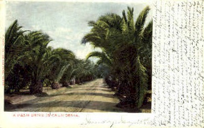 A Palm Drive - MIsc, California CA Postcard