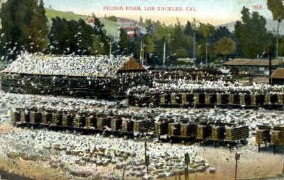 Pigeon Farm - Los Angeles, California CA Postcard
