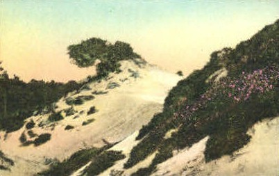 Sand Dunes - Monterey, California CA Postcard