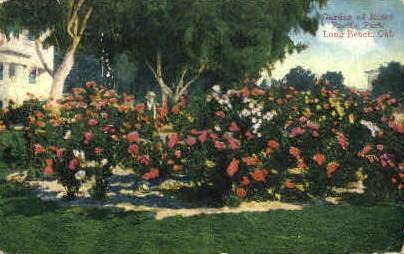 Garden of Roses - Long Beach, California CA Postcard