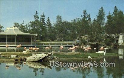 Flamingo Island - Los Angeles, California CA Postcard