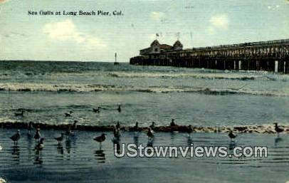 Sea Gulls - Long Beach, California CA Postcard