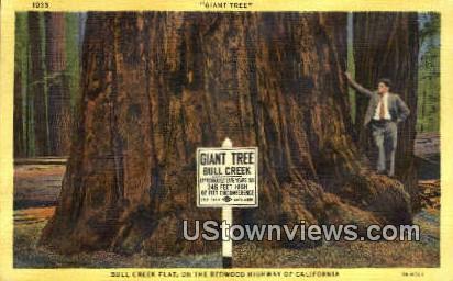 Bull Creek Flat - Redwood Highway, California CA Postcard