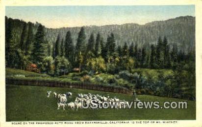 Mt. Whitney - Bakersfield, California CA Postcard