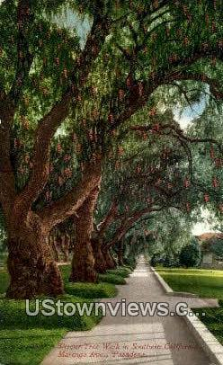 Pepper Tree Walk - Pasadena, California CA Postcard