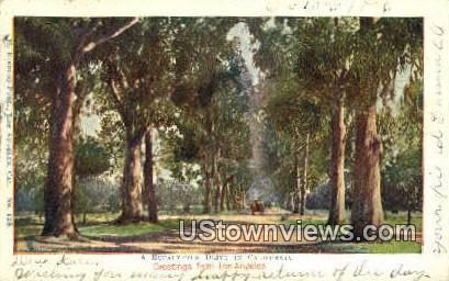 Eucalyptus Drive - Los Angeles, California CA Postcard