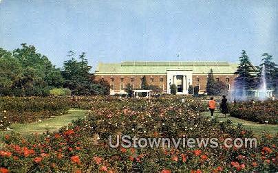 Rose Gardens, Exposition Park - Los Angeles, California CA Postcard