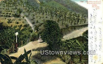 Banana Farm - Santa Barbara, California CA Postcard