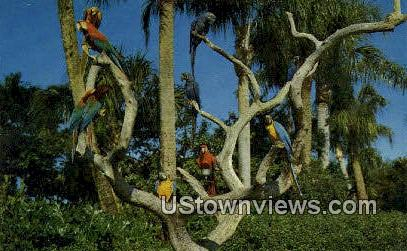 Parrot Tree - Los Angeles, California CA Postcard