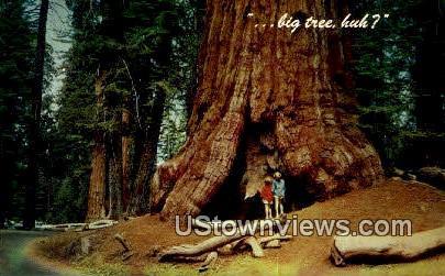Kings Canyon National Park - California CA Postcard