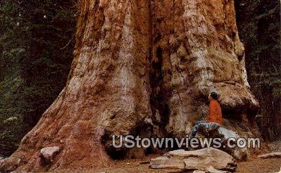 General Grant Tree - Kings Canyon National Park, California CA Postcard