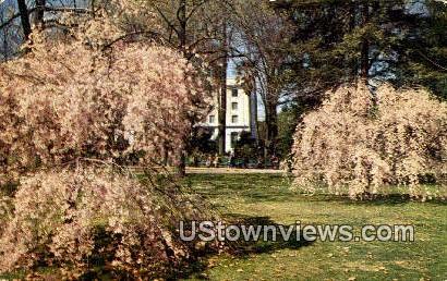 Weeping Cherry Tree - Sacramento, California CA Postcard
