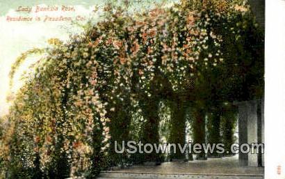 Lady Banksia Rose - Pasadena, California CA Postcard