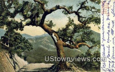 Mountain Drive - Santa Barbara, California CA Postcard