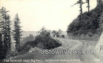 Big Basin - California CA Postcard