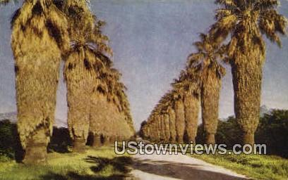 Palm Drive - Riverside, California CA Postcard