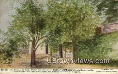 Luther Burbank's Santa Rosa Grounds - California CA Postcard