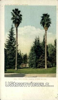Two Stately Palms - Riverside, California CA Postcard
