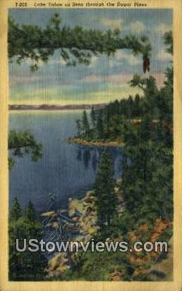 Sugar Pines - Lake Tahoe, California CA Postcard