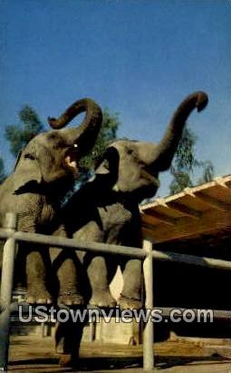 Griffith Park Zoo - Los Angeles, California CA Postcard