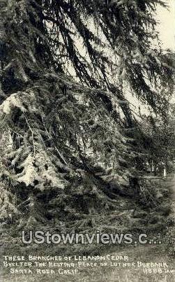 Luther Burbank, Real Photo - Santa Rosa, California CA Postcard