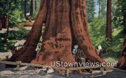 The Tennessee Tree - Kings Canyon National Park, California CA Postcard