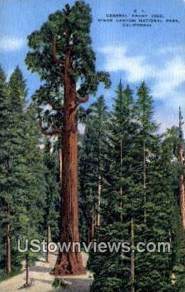 General Giant Tree - Kings Canyon National Park, California CA Postcard