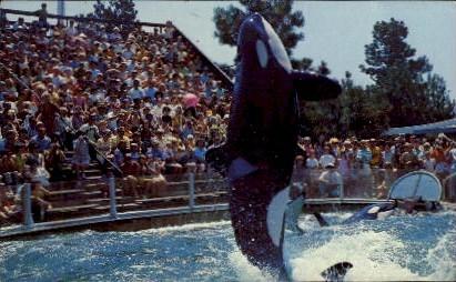 Killer Whale, Sea World - San Diego, California CA Postcard