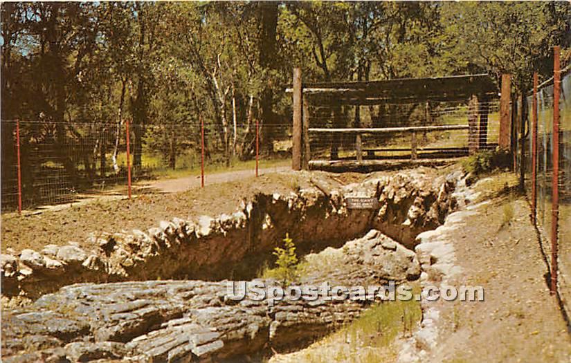The Giant, Redwood - Santa Rosa, California CA Postcard