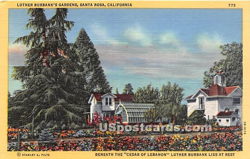 Luther Burbank's Gardens - Santa Rosa, California CA Postcard