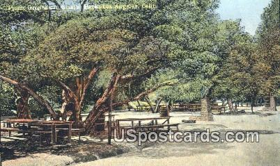 Picnic Grounds, Griffith Park - Los Angeles, California CA Postcard
