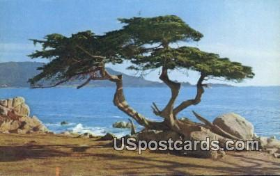 Cypress Tree Pescadero Point - Monterey Peninsula, California CA Postcard