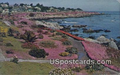 Ice Plant - Monterey Peninsula, California CA Postcard