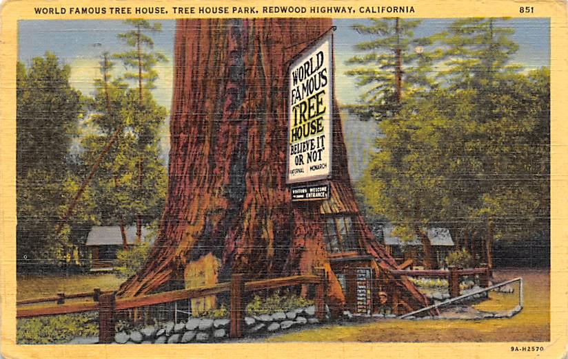 Redwoods Highway CA