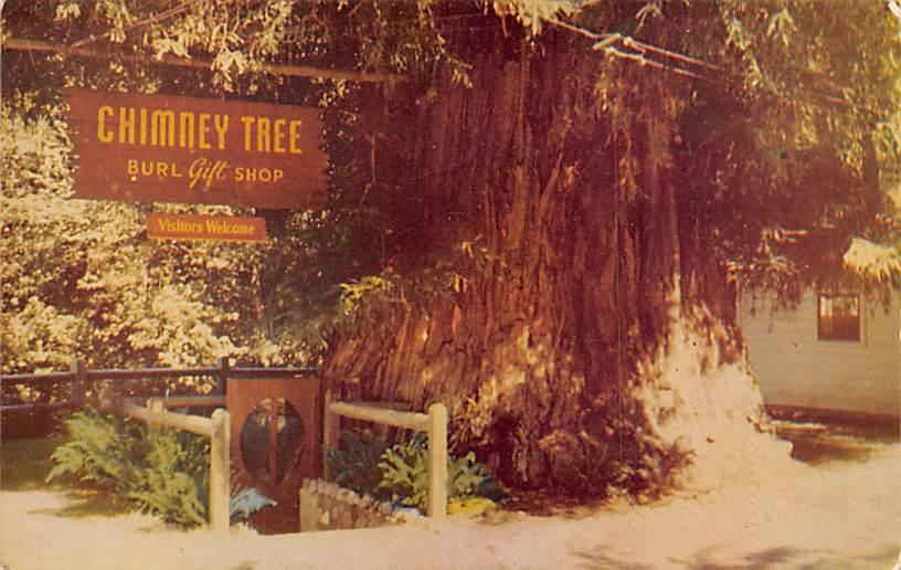 Redwood CA