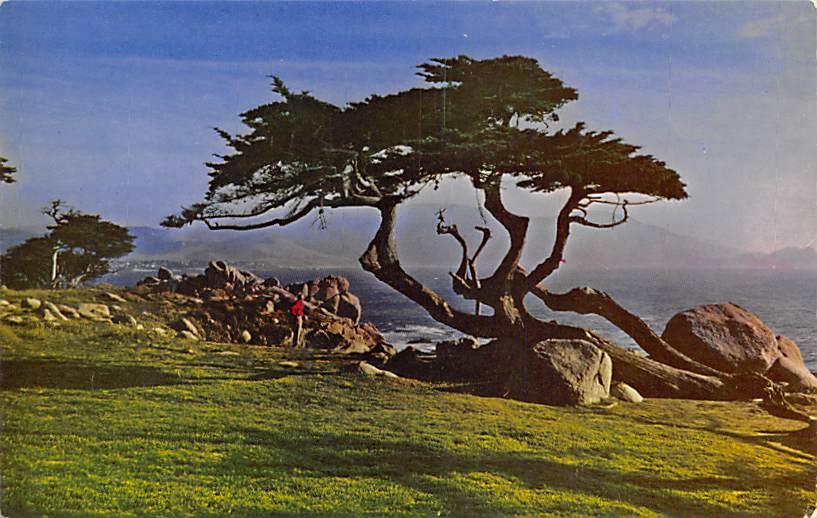 Cypress CA