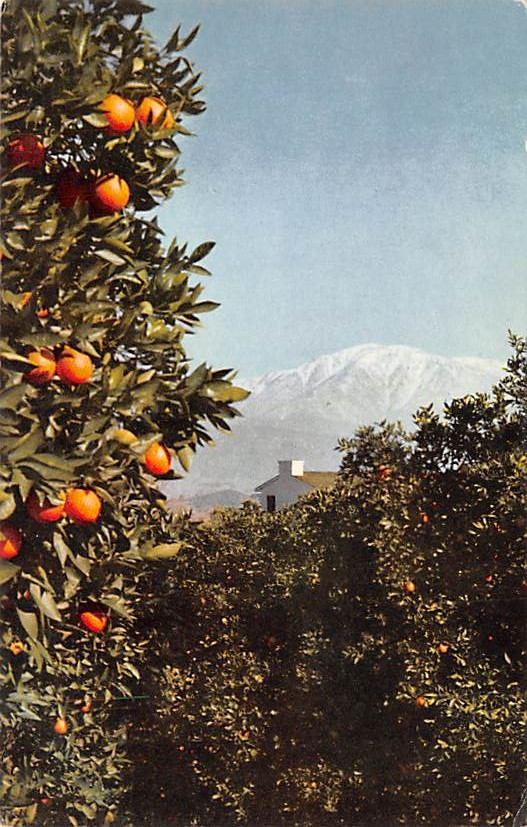 Mount Baldy CA
