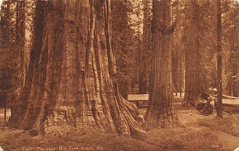 Maxiposa Big Tree Grove CA