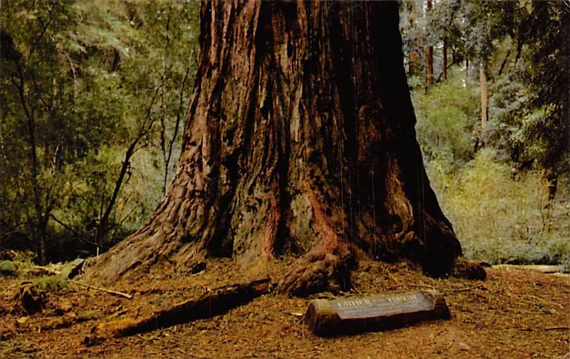 Big Basin Redwoods State Park CA