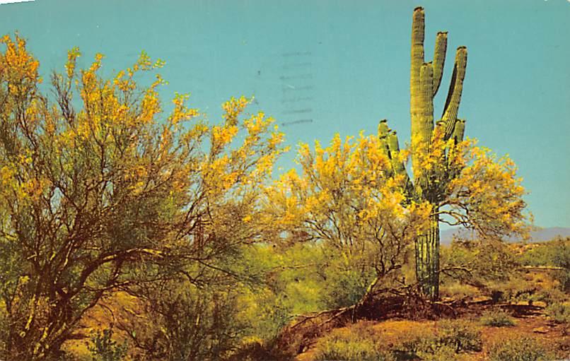 Palo Verde CA